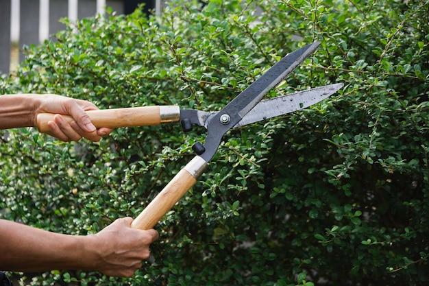 庭師は、自然の背景に剪定はさみで木を剪定します。
