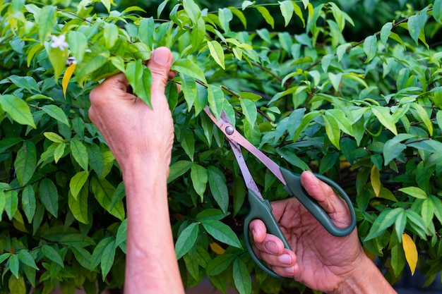 Gardener pruning trees with scissors