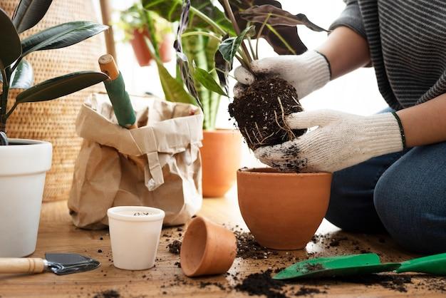 Giardiniere che rinvasa una pianta d'appartamento all'interno della sua casa