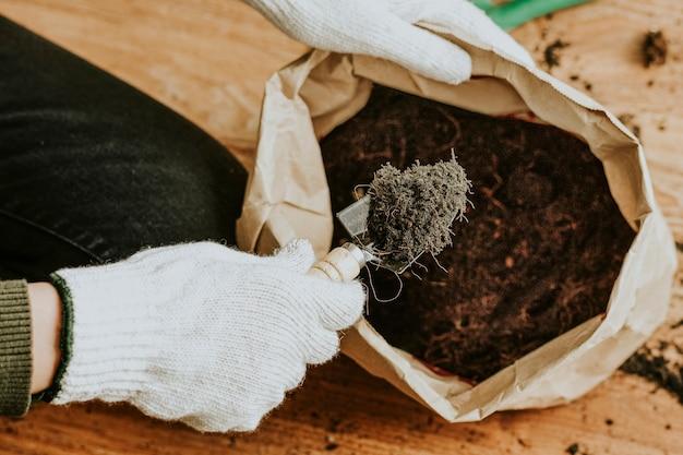 Giardiniere che rinvasa una pianta d'appartamento