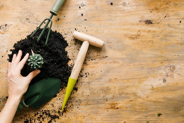 Gardener's hand planting cactus plant with soil and gardening tool against wooden surface