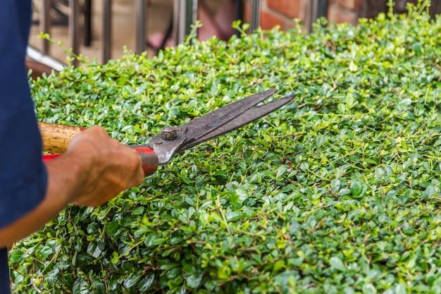 ガーデナー、はさみで木を切り取る