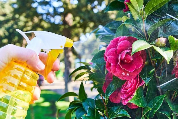 スプレーボトルを使用して屋外の植物に水をまく庭師