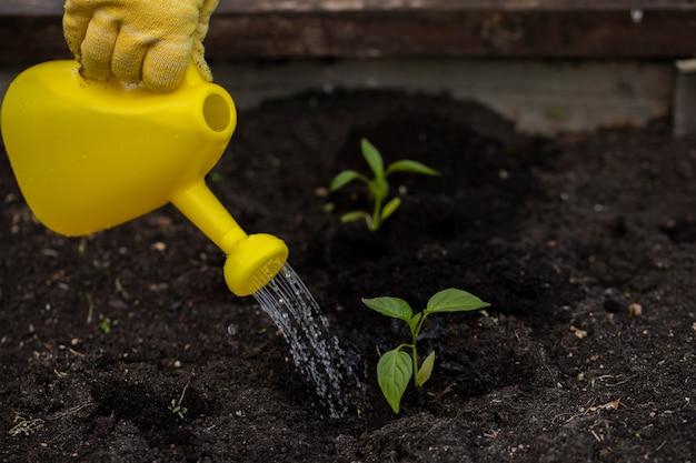 Садовник поливает только что посаженные цветы и растения из лейки