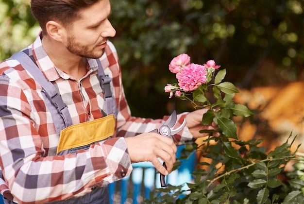 Садовник с секаторами обрезки цветка