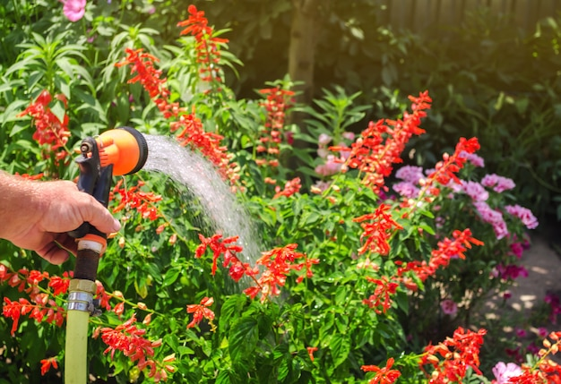 A gardener with a watering hose