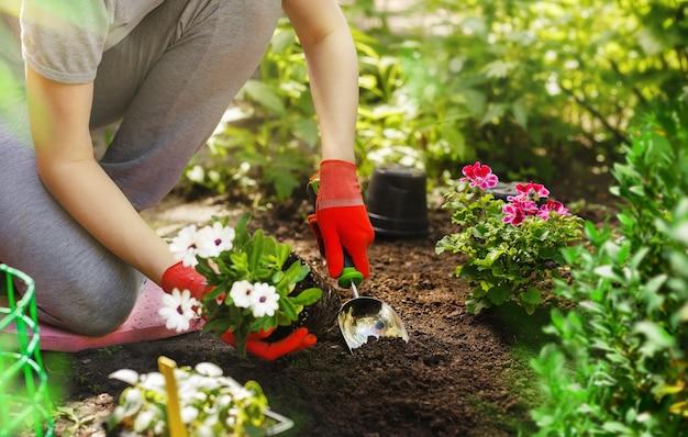 Женщина-садовник сажает цветы в летнем саду утром.