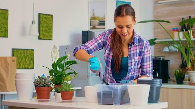 肥沃な土壌を白い植木鉢に注ぎ、シャベル、手袋、観葉植物を使って家の装飾に植え替える庭師の女性。朝のテーブルの上のキッチンでガーデニングをする女性