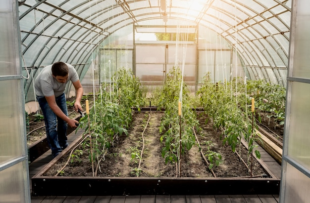 Gardener working in a greenhouse