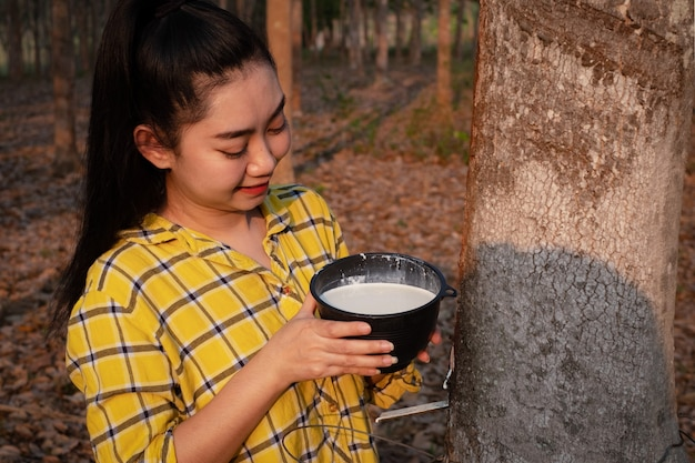 庭師の若いアジアの女性は木の生のパラゴムミルクのフルカップを見て