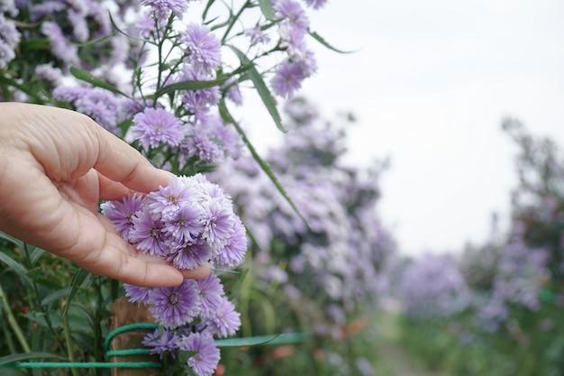庭師は花畑で害虫や病気をチェックしています