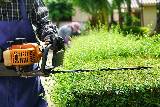 Gardeners cutting small tree in garden