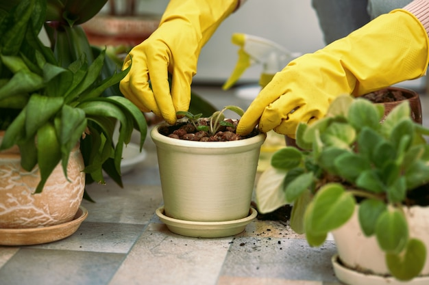 Gardeners hand in yellow gloves planting flowers in pot.