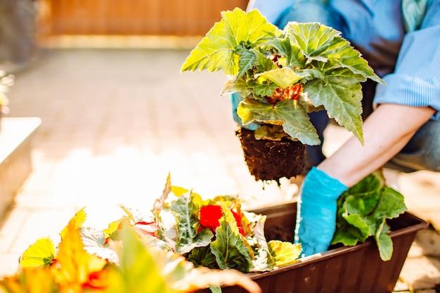 庭師は裏庭で土や土でポットに花を植える手