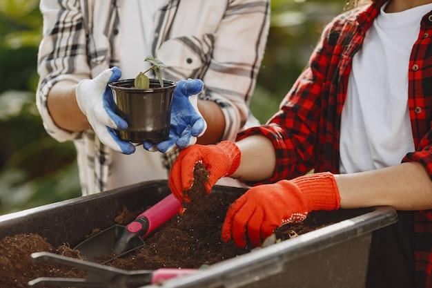 庭師の手。植物を新しい鉢に移植する女性