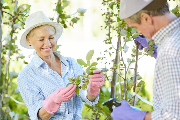 Gardeners inspecting plants