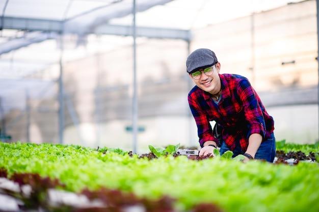 彼の庭でサラダを見て庭師のサラダの男性健康的な野菜のプロットを作ることの概念