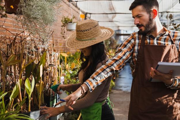 Giardinieri che spruzzano piante