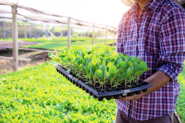 庭師は温室で有機野菜のトレイを持って立っています。