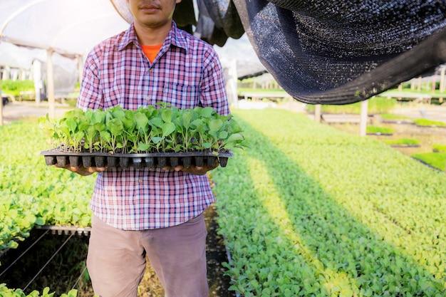 정원사는 농장에서 유기농 채소 쟁반을 들고 서 있습니다.