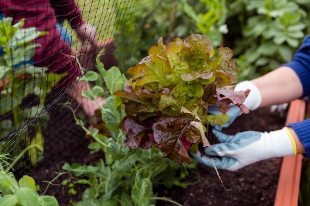 植物の世話をする庭師