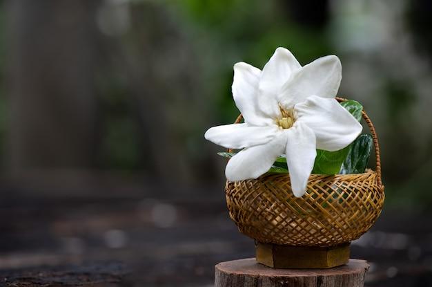 Gardenia saxatilisgeddesは自然に花を咲かせます。