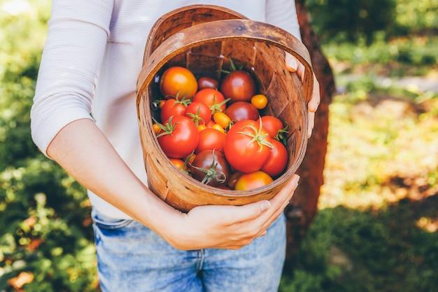 ガーデニングと農業のコンセプトです。若い女性の農場労働者の手が庭で新鮮な完熟有機トマトを選ぶバスケットを保持しています。温室の生産物。野菜の食糧生産。