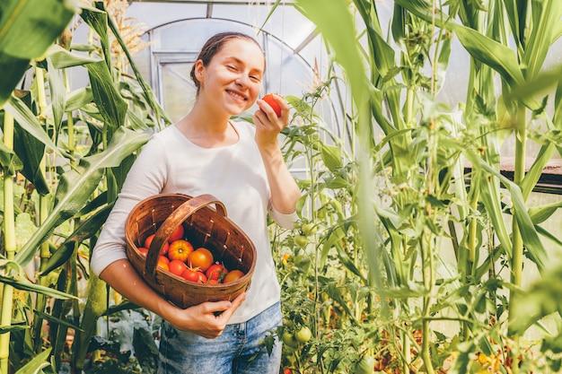 Садоводство и сельское хозяйство концепция. сельскохозяйственный рабочий молодой женщины при корзина выбирая свежие зрелые органические томаты. тепличные продукты. производство растительных продуктов.