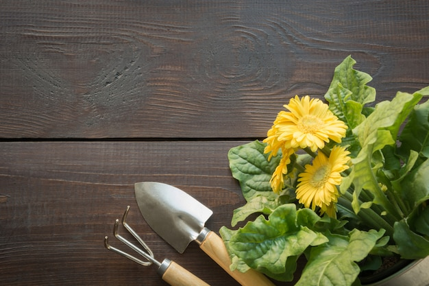 Gardening background with yellow gerbera and tolls.