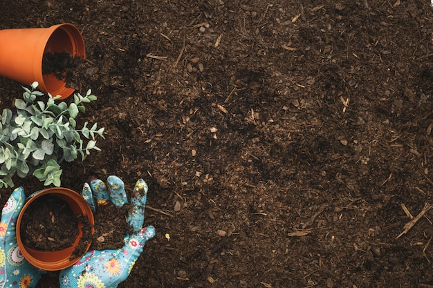Gardening composition with hands planting and space on right