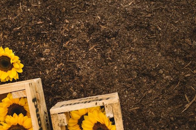 Садовая композиция с подсолнухами и местом сверху