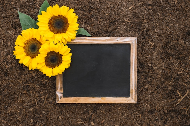 Gardening composition with sunflowers and blank slate