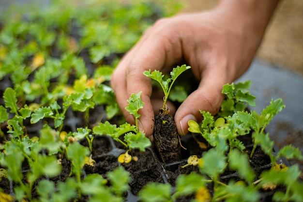 Концепция садоводства фермер, приносящий рассаду в детских горшках, готовящихся к выращиванию на участках почвы.