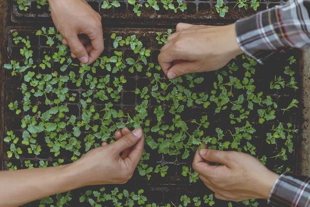ガーデニングの概念は、農民が緑の苗木を鉢から取り出して準備された土壌区画で育てる前に淘汰することです。