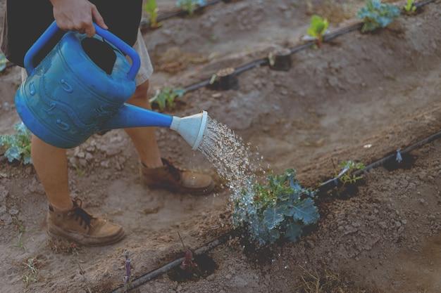 ガーデニングのコンセプトじょうろを使って野菜に水をやる男性の庭師は、土壌に湿り気を与えます。