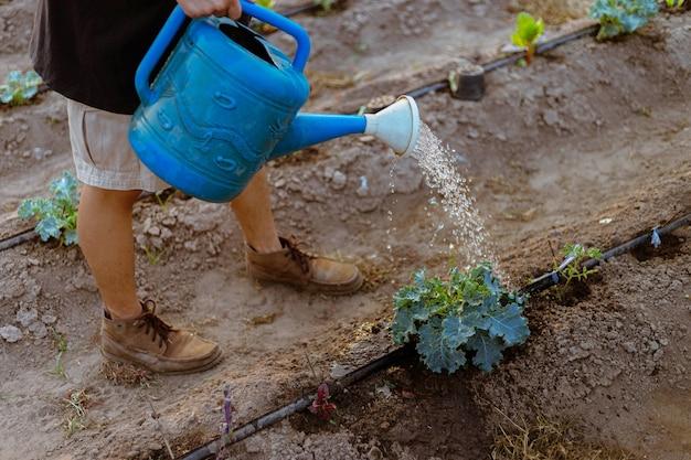ガーデニングのコンセプトじょうろを使って野菜に水をやる男性の庭師は、土壌に水分を供給します。