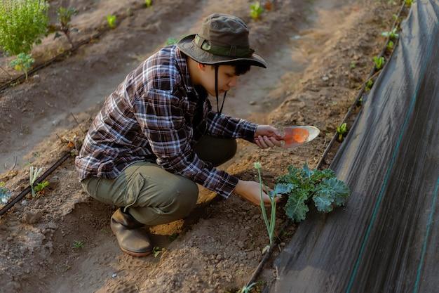 Концепция садоводства молодой садовник мужского пола заботится о овощах, лопатой почву вокруг растения.