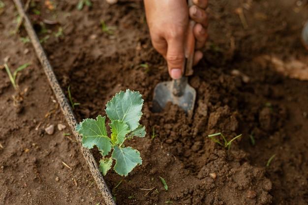 ガーデニングのコンセプトは、植物の周りの土をシャベルで削って野菜の世話をする若い男性の庭師です。