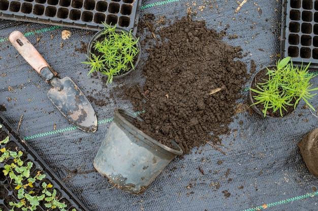 ガーデニングのコンセプトいくつかの緑の植物は、植物がより大きく成長できるように、より大きなサイズの鉢に植え替えられました。