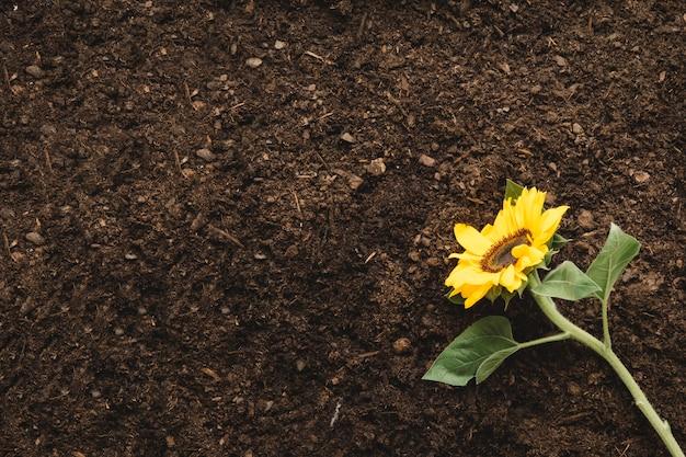 Концепция садоводства с растениями и пространствами слева
