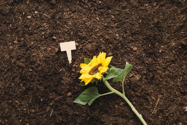 Концепция садоводства с растением на почве