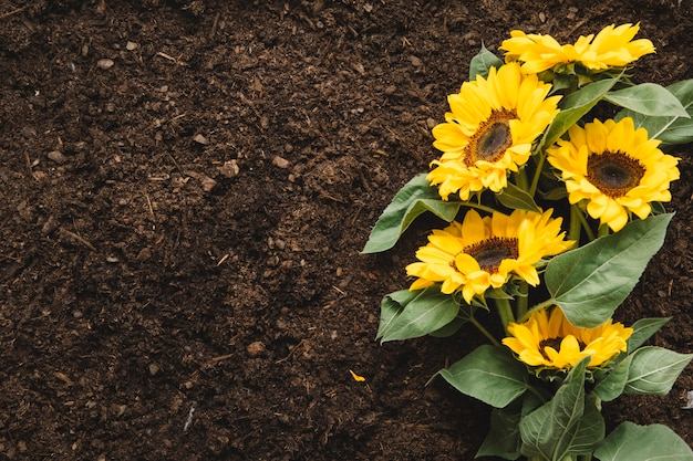 Gardening concept with sunflower and space on left