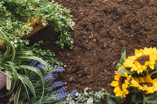 Концепция садоводства с растительностью и подсолнухами