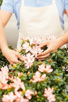 원예. 온실에 서 있는 동안 꽃을 돌보는 앞치마를 입은 남자의 자른 이미지