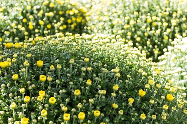 ガーデニング要素-黄色い花の茂みのパターン。