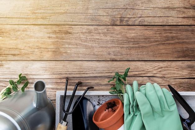 원예 취미 개념 평면 녹색 재배 오이 묘목, 세라믹 냄비, 갈퀴, 삽, 장갑, 금속 물을 수 및 나무 배경에 흙으로 누워