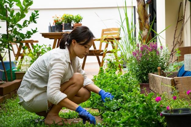 裏庭でのガーデニング。アジアの女性は屋外で彼女の庭を飾るために草を刈ります。