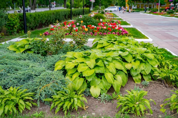Озеленение и ландшафтный дизайн в виде многолетнего садового газона с клумбой и декоративными растениями в декоративной благоустроенной дорожке.