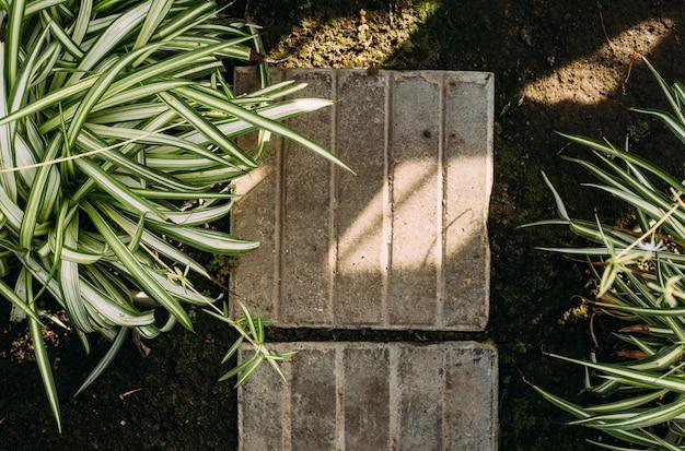 ガーデニング、植栽、植物のコンセプト-温室で鉢植えの植物のクローズアップ。コピースペース付きのトップビュー