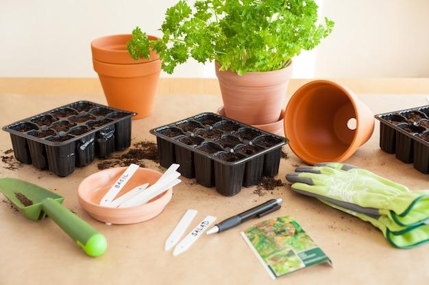 ガーデニング、家での植栽。発芽ボックスに種子を播種
